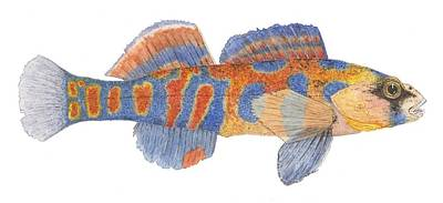 Painting - Freshwater Orange-throated Darter by Thom Glace