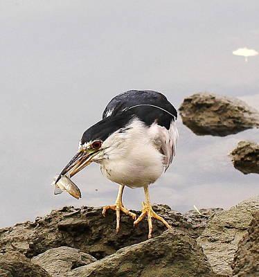 Photograph - Fridays Fish by John King