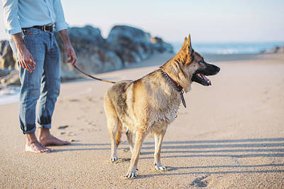 Photograph - German Shepherd With Man On The Beach by Maksym Kaharlytskyi