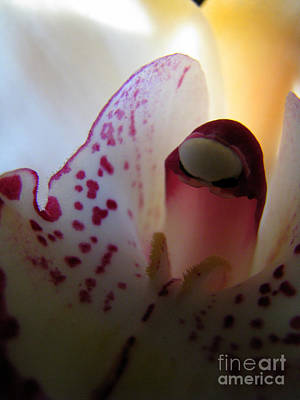 Photograph - Friend Of The Lily by C Ray Roth