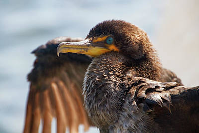 Photograph - Friendly Cormorant 2 by Bob Slitzan