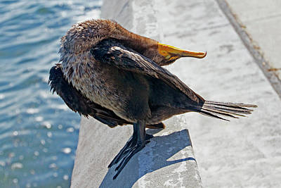 Photograph - Friendly Cormorant 3 by Bob Slitzan