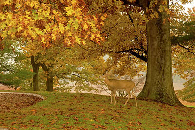 Photograph - Friendly Deer by Paul W Faust - Impressions of Light