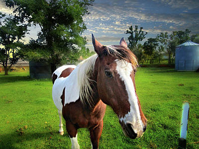 Photograph - Friendly Horse by William Tanata