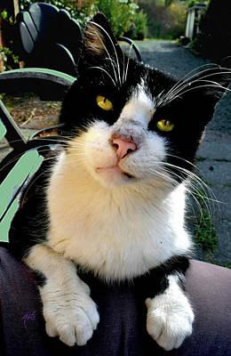 Photograph - Friendly Klamath Inn Cat by Michele Avanti