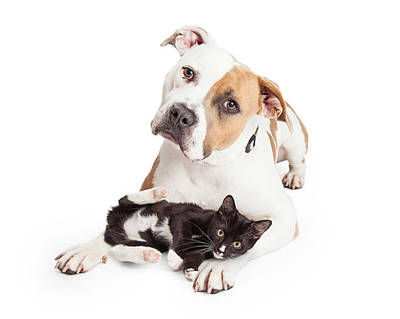 Dog Collage Photograph - Friendly Pit Bull Dog And Affectionate Kitten by Susan Schmitz
