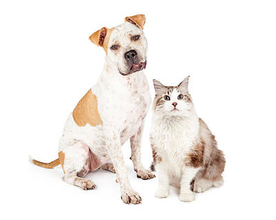 Dog Collage Photograph - Friendly Pit Bull Dog And Pretty Cat by Susan Schmitz