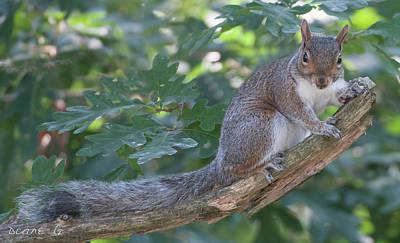 Photograph - Friendly Squirrel by Diane Giurco