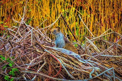 Photograph - Friendly Squirrel  by Garry Gay