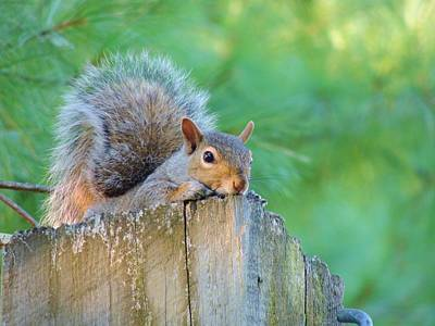 Photograph - Friendly Squirrel by Lisa Gilliam