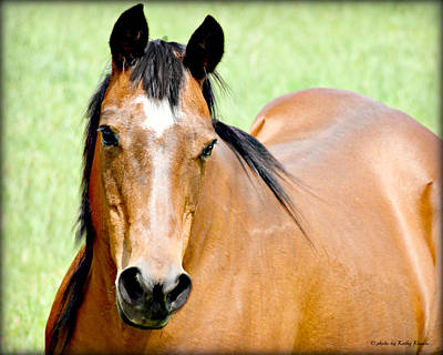 Photograph - Friendly Star, The Horse by Kathy M Krause