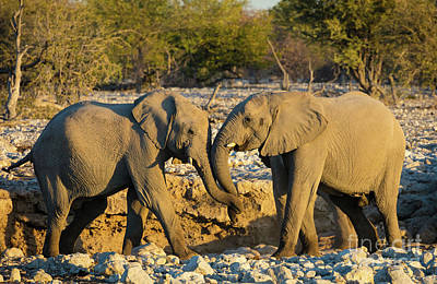 Photograph - Friendly Trunks by Inge Johnsson