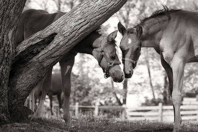 Friends - Black And White Art Print by Angela Rath