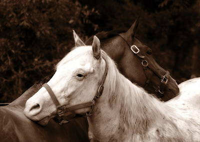Photograph - Friends - Sepia by Angela Rath