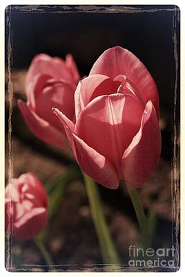 Frank J Casella Royalty-Free and Rights-Managed Images - Friends are flowers in the garden of life - Border by Frank J Casella