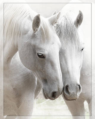 Art Print featuring the photograph Friends D2573 by Wes and Dotty Weber