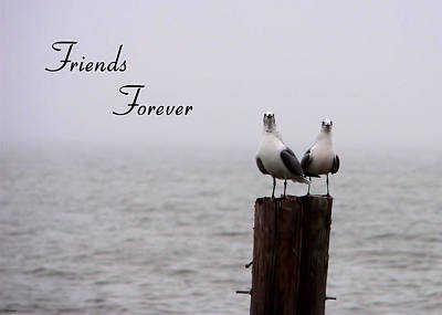 Photograph - Friends Forever by Kathy K McClellan