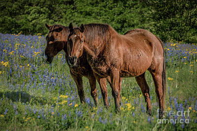 Photograph - Friends In The Bluebonnets by Teresa Wilson