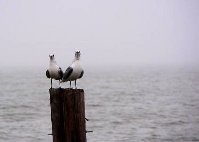 Photograph - Friends In The Fog by Kathy K McClellan
