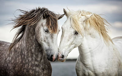 Bnw Wall Art - Photograph - Friends Iv - Colour by Tim Booth