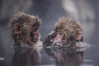 Bathing Photograph - Friends by Takeshi Marumoto