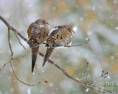Photograph - Friends Through The Storm by Amy Porter