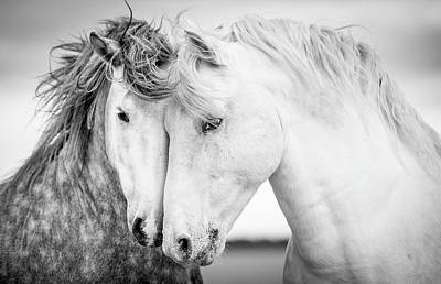 Black Photograph - Friends V by Tim Booth