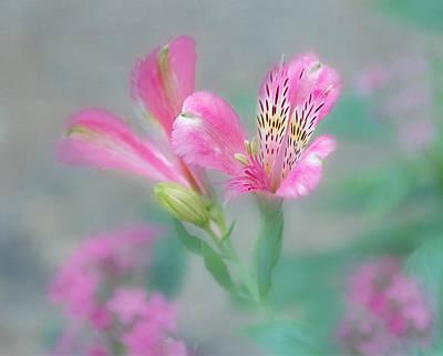 Peruvian Lily Photograph - Friendship - Alstroemeria Flower by Kim Hojnacki