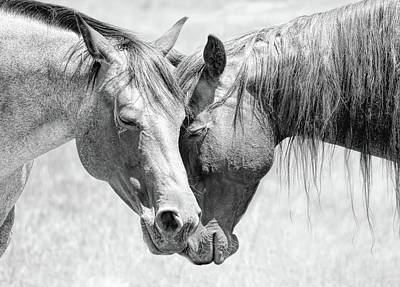 Photograph - Friendship Of Horses Black And White by Jennie Marie Schell