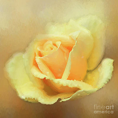 Photograph - Friendship Rose by Darren Fisher