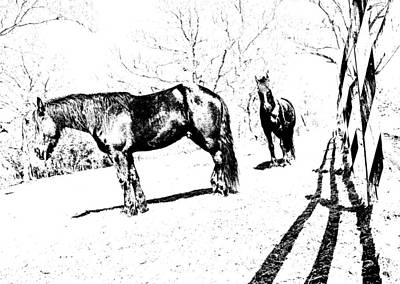 Photograph - Friesian Litho by  Tina McGinley