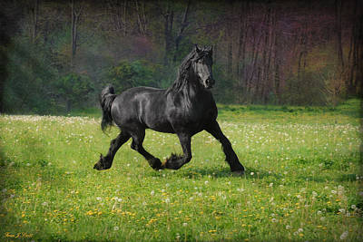 Black Friesian Photograph - Friesian Power by Fran J Scott