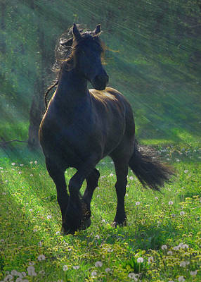 Black Friesian Photograph - Friesian Sun by Fran J Scott