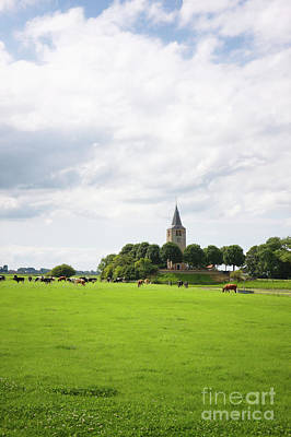 Photograph - Friesland Meadow Cattle Church by Jan Brons