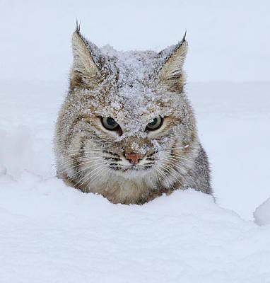 Photograph - Friggin Winter by Steve McKinzie