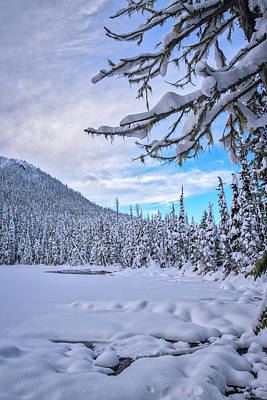 Photograph - Frigid Beauty by Windy Corduroy