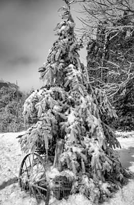 Wagon Wheels Photograph - Frigid Spruce Bw by Steve Harrington