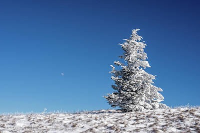 Photograph - Frigid Winter Day On The Appalachian Trail by Serge Skiba