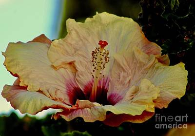 Photograph - Frilly And Fancy by Craig Wood