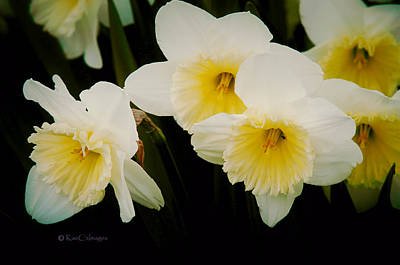 Frilly Daffodils Art Print by Kae Cheatham