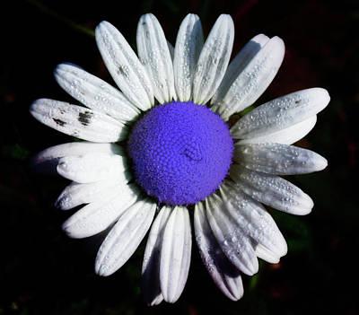 Fringe - Blue Flower Art Print by Bill Cannon