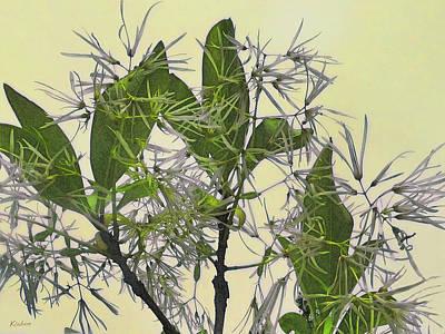 Fringe Tree Art Print