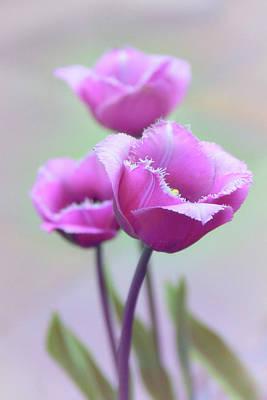 Fringe Tulips Art Print