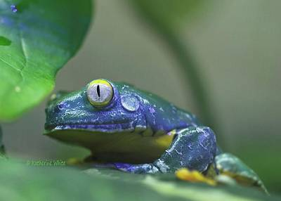 Photograph - Fringed Leaf Frog by Katherine White