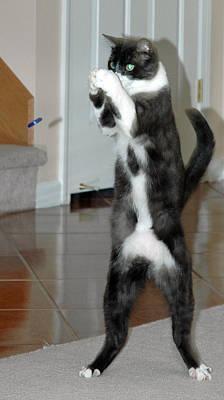 Frisbee Cat Art Print