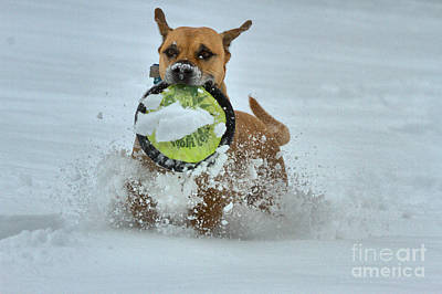 Photograph - Frisbee In The Snow by Adam Jewell