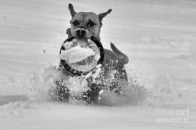 Photograph - Frisbee In The Snow Black And White by Adam Jewell