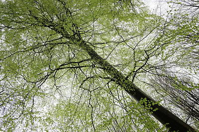 Photograph - Frist Greens In The Beech Forest Spring Season by Martin Stankewitz