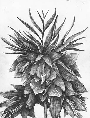 Meleagris Drawing - Fritillaria Meleagris by Thomas Lucio