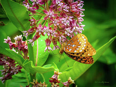 Photograph - Fritillary 29 by Timothy Harris